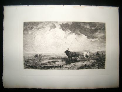 A. Massse 1885 Etching. Bulls in the Roman Campagna, Italy | Albion Prints